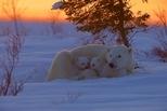 溫暖的小熊