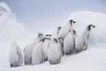 企鵝托兒所