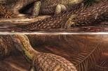 2.4億年前就有癌症!這隻「龜」曾受骨癌所苦