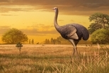 北半球首度發現巨鳥化石!3.6公尺的牠可能曾是古代人族的點心