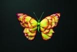 化身昆蟲的花朵