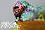 宏都拉斯的「蛙壺菌」危機