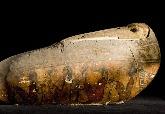 古埃及人將上百萬隻鳥做成木乃伊。他們哪來這麼多鳥?