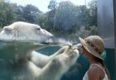 分析:為何人們會冒著生命危險跟野生動物自拍?