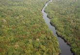 不必等川普回頭 在全球無樹土地廣植1.2兆棵樹 可吸收2/3人為排碳