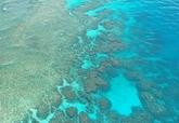 管理出包? 大堡礁集水區驗出高濃度殺蟲劑