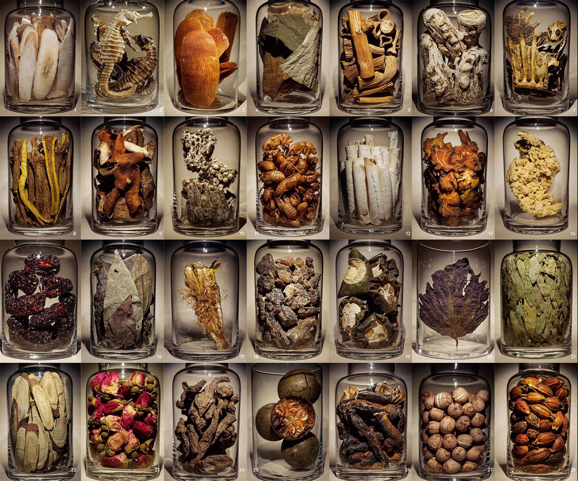 兩千兩百多年以來,中醫師使用多種天然藥材來治病,包括三七、海馬、玫瑰花、甘草與紫河車(人類胎盤)。中國與世界上其他地方至今仍天天使用這些與其他數千種藥材。(請至ngm.com/Jan2019深入認識這些藥材及其功能。)  第一行編號1、8、15、22號罐中的藥材已被耶魯大學用於開發大有可為的抗癌藥物PHY906。  1. 白芍 2. 海馬 3. 天麻 4. 荷葉 5. 蘆根 6. 當歸 7. 鱉甲 8. 黃芩 9. 陳皮 10. 蜂房 11. 蟬蛻 12. 茯苓 13. 川芎 14. 紫河車 15. 大棗 16. 淫羊霍 17. 量天尺 18. 乳香 19. 栝蔞實 20. 紫蘇葉 21. 番瀉葉 22. 甘草 23. 玫瑰花 24. 地黃 25. 羅漢果 26. 地龍 27. 蓮子 28. 梔子  藥材大小並非實際比例。 PHOTOGRAPHED AT EMPEROR'S COLLEGE OF TRADITIONAL ORIENTAL MEDICINE, SANTA MONICA, CALIFORNIA (3, 4, 5, 7, 10, 12, 13, 14, 18, 19, 24, 28) AND NATIONAL WILDLIFE PROPERTY REPOSITORY, COMMERCE CITY, COLORADO (2); SOURCES: ROBERT NEWMAN, EMPEROR'S COLLEGE OF TRADITIONAL ORIENTAL MEDICINE; AMY MATECKI, INTERNATIONAL CENTER FOR INTEGRATIVE MEDICINE