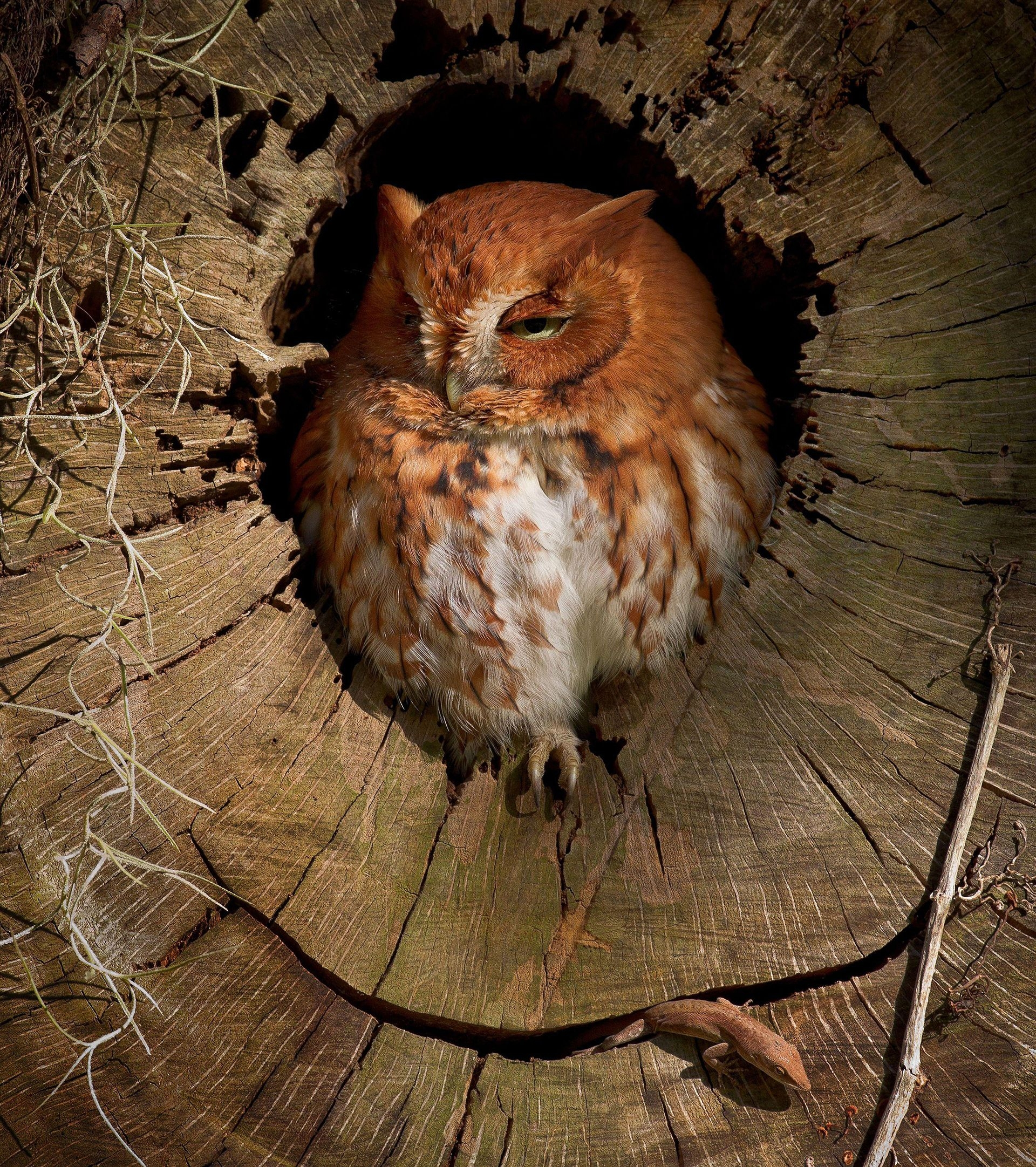 Photograph by Steve Ellwood, National Geographic Your Shot