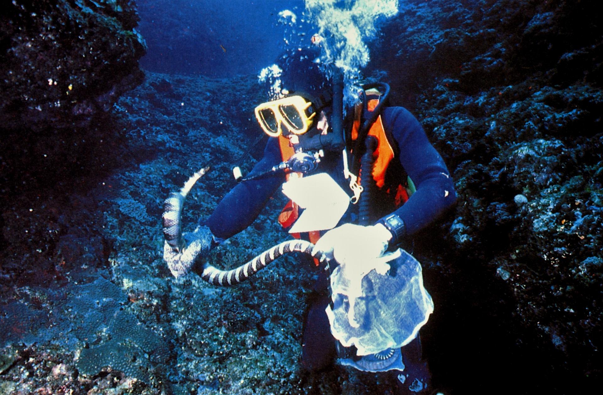 海蛇反擊性實驗。攝影:蘇焉