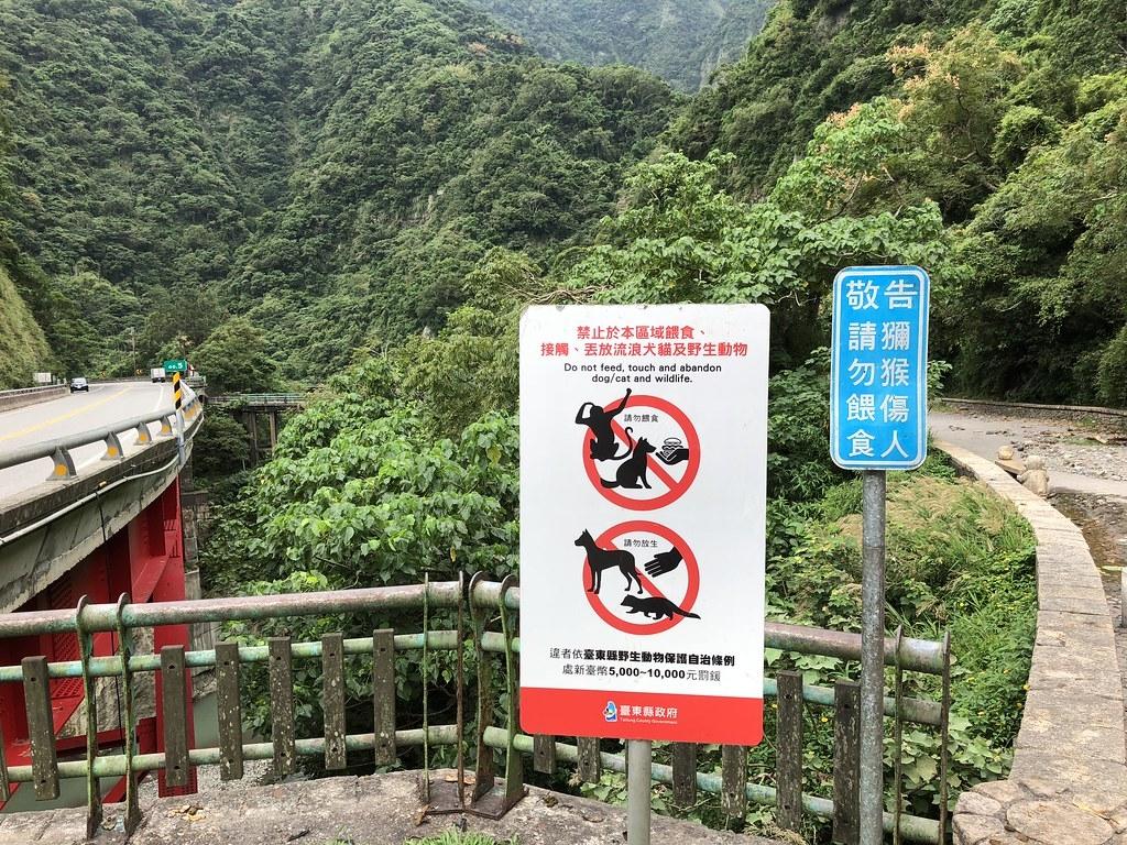 臺東登仙橋因餵食者眾,地方政府雖插牌警告,仍無法杜絕。攝影:廖靜蕙