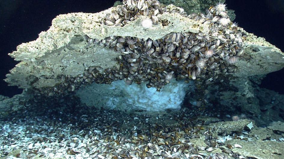在墨西哥灣深處的海床下,藏著富含甲烷、像冰一樣的甲烷水合物(methane hydrate)。PHOTOGRAPH COURTESY NOAA OKEANOS EXPLORER PROGRAM