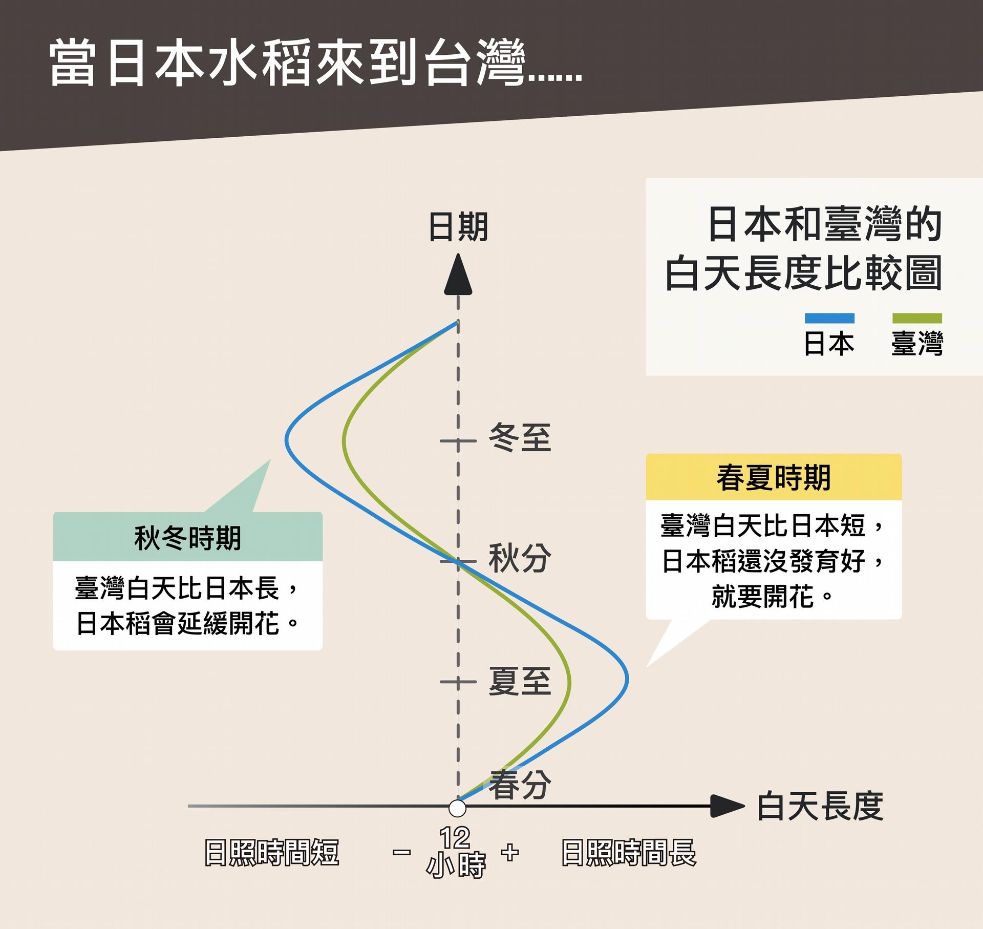 日本來的水稻在緯度較低的臺灣種植,春、夏稻子尚未發育完全就提早抽穗,秋、冬又會延遲抽穗,一年只有一穫,品質也不好。 <br>圖說設計│黃曉君、林洵安