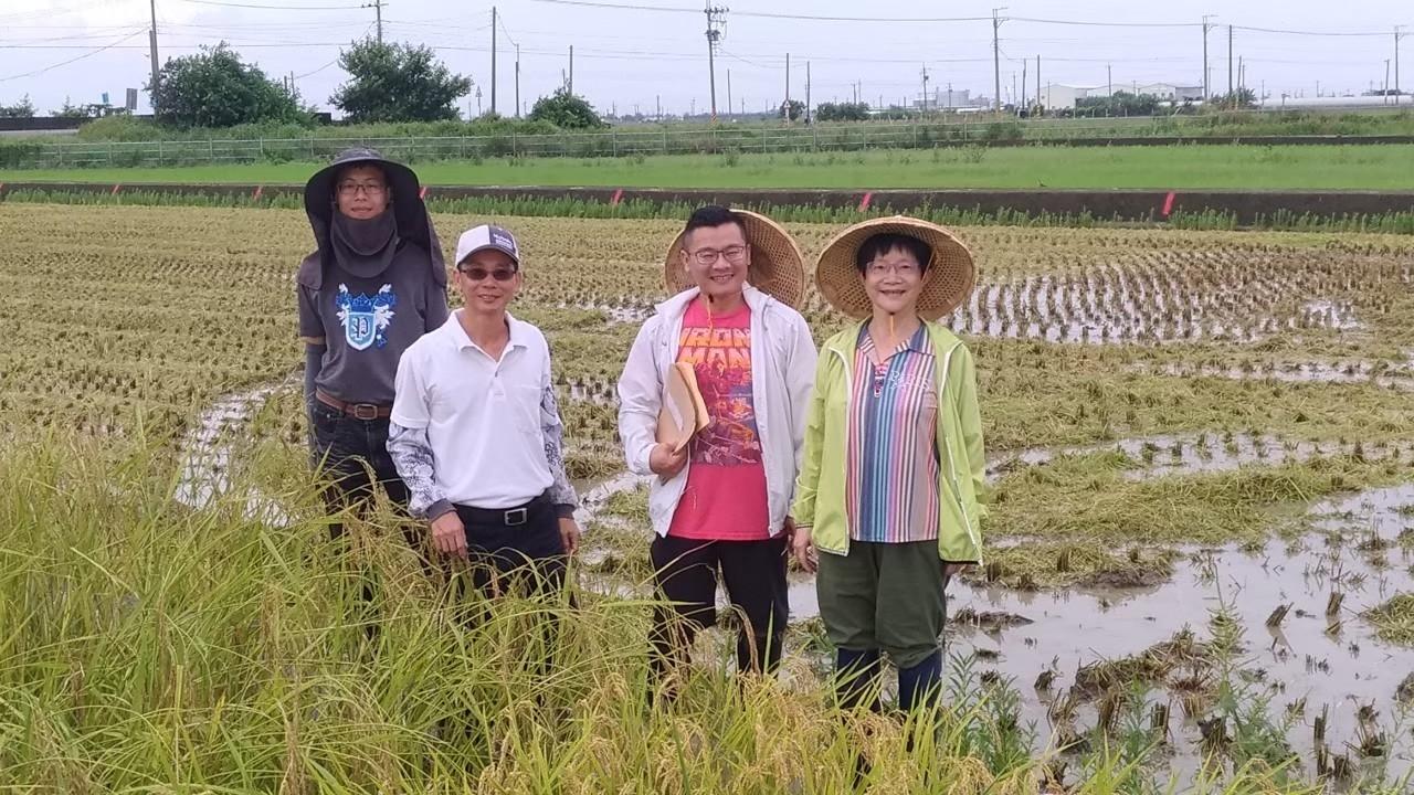 邢禹依特聘研究員 (右一)與吳正杰 (右二)。「我們學農的是看天吃飯,也比較認命。」邢禹依笑著說:「因為研究的材料都是種出來的,但水稻生長期長,又容易受氣候影響,再加上臺灣會有颱風侵襲,被風吹倒、被水淹……幾個月的心血一下子就泡湯了,哭也沒有用,只能等到下一季,重新再來。」 <br>圖片來源│邢禹依
