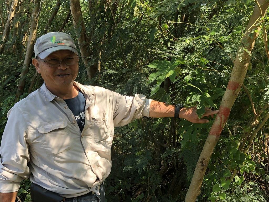 森林護管員邱水鏡指著樹幹上的紅漆,這有如造林界的摩斯密碼,懂的人就知道該在這裡轉彎。攝影:廖靜蕙