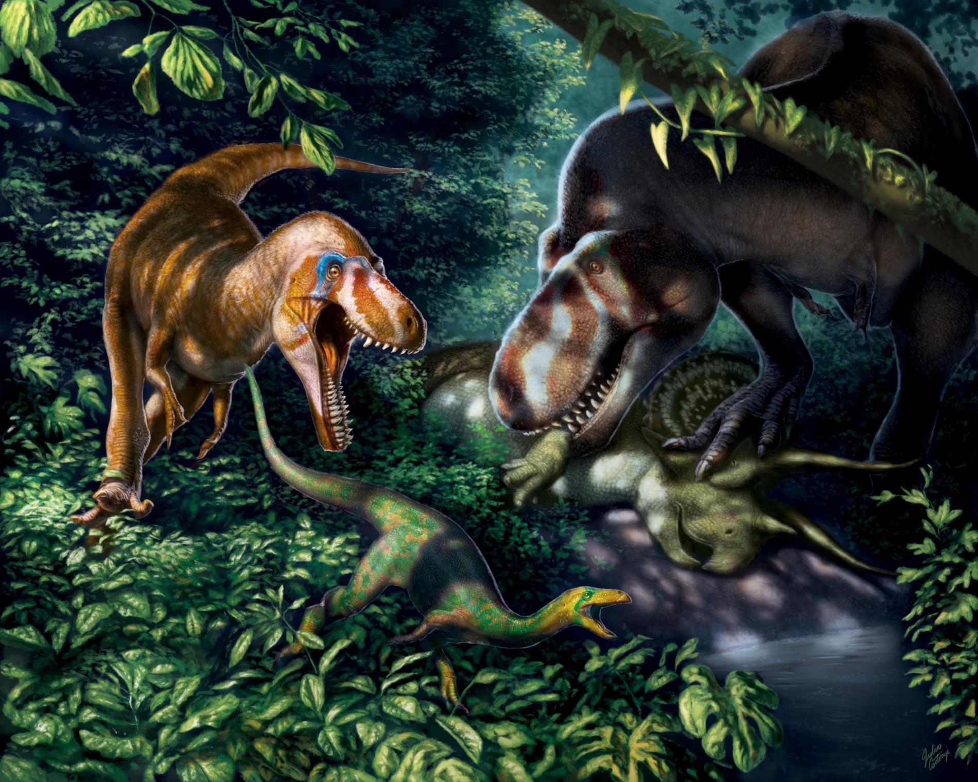 應屬霸王龍(<i>Tyrannosaurus rex</i>)亞成體的化石顯示這種牙可碎骨的龐然大物在十多歲時是配備著似刃利齒、精瘦而敏捷的掠食者。 ILLUSTRATION BY JULIUS T. CSOTONYI