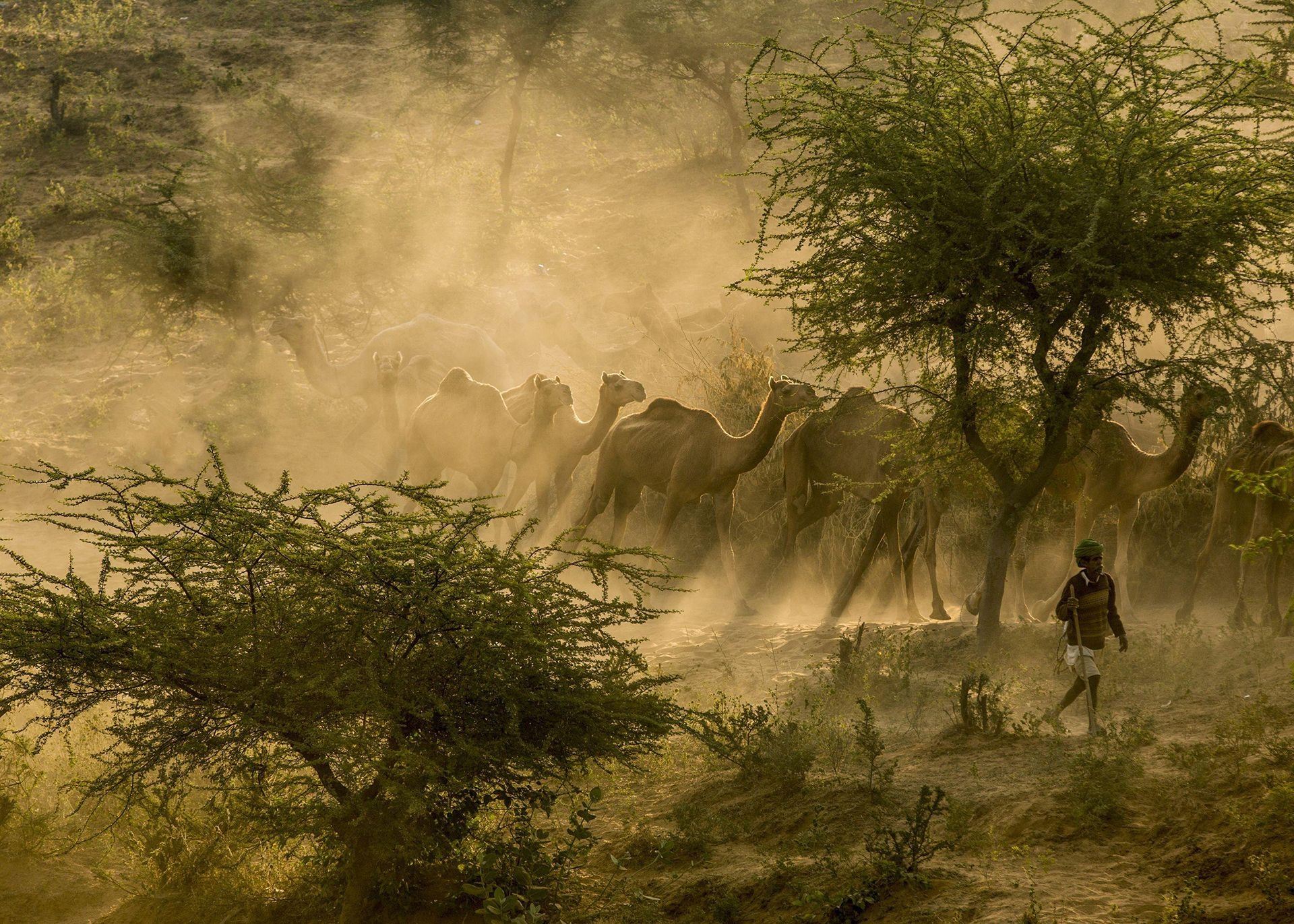 Photograph by Jiti Chadha, National Geographic