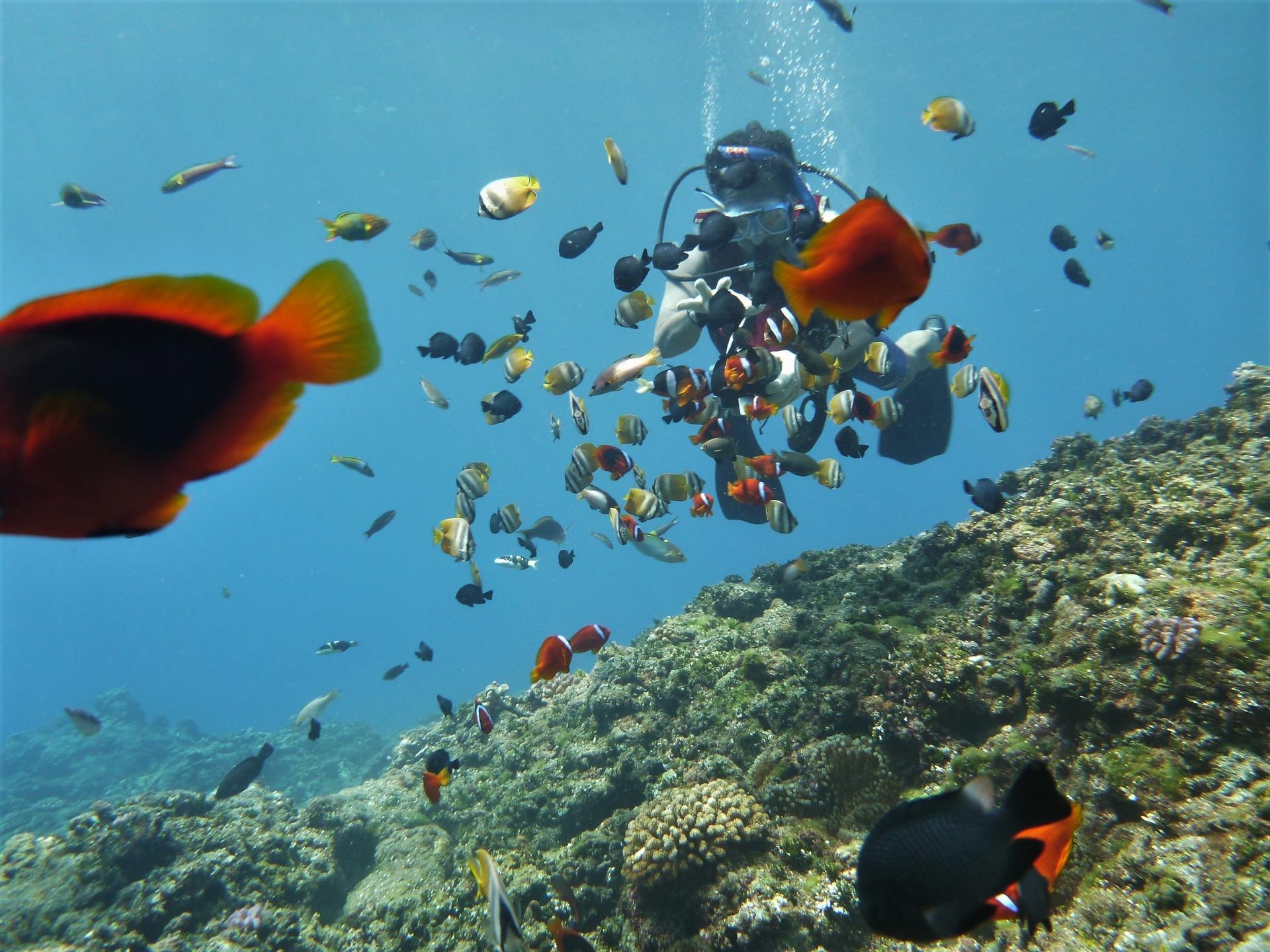 蘭嶼的海底生態。攝影:杜銘章