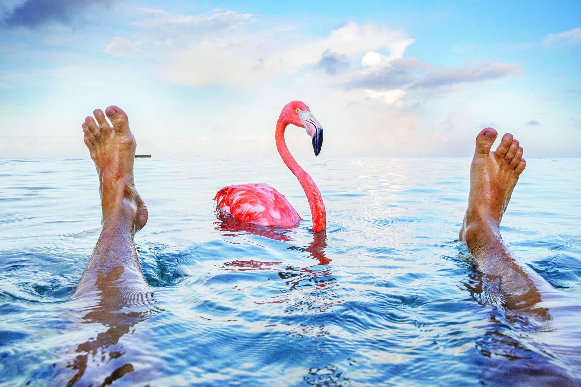 攝影師亞斯博. 杜斯特(歐黛特的堂弟)和鮑伯一起在加勒比海游泳。攝影: 亞斯博. 杜斯特 JASPER DOEST