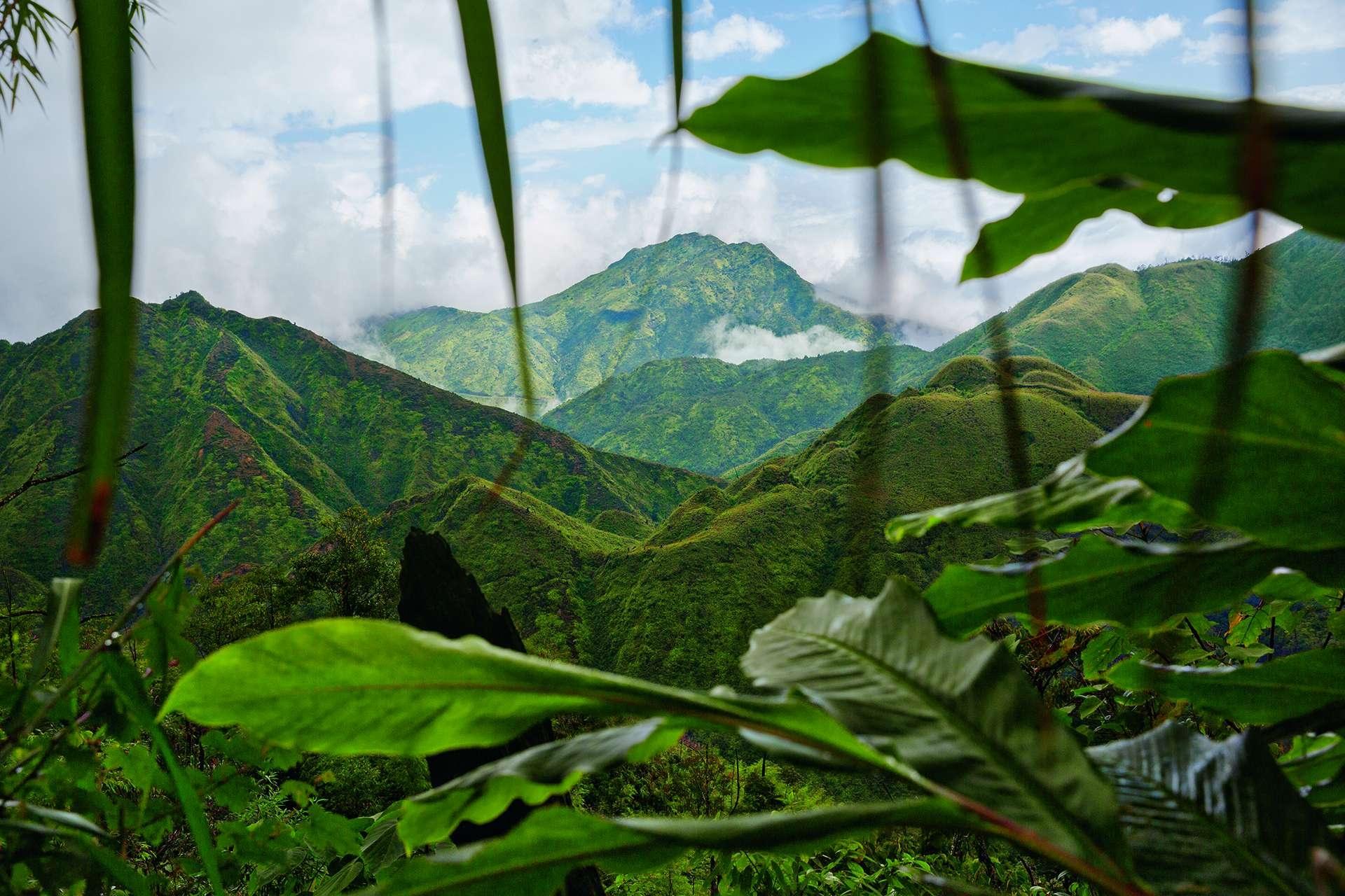 有愈來愈多大膽的冒險家前往靠近中越邊境的黃連國家公園。生長在此處的草果是河粉及其他越南菜的必備香料。攝影: 鄭永仁 IAN TEH