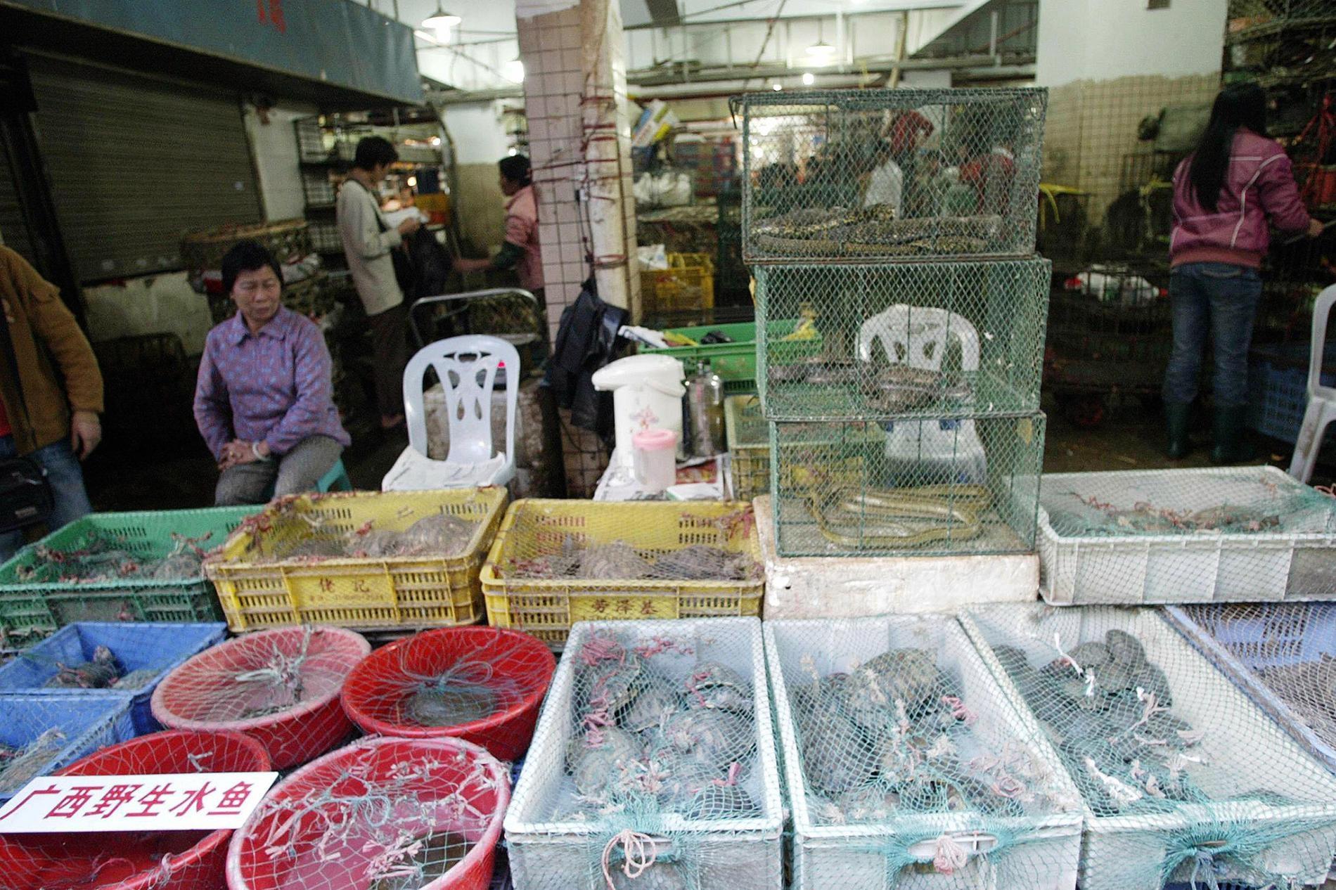 在深圳的一處野生動物市場,攤販展示著出售的活體爬行動物與哺乳動物。中國有54種動物能被合法交易,供人食用。這次冠狀病毒疫情已迫使活體野生動物交易成為國際焦點。PHOTOGRAPH BY AFP, GETTY