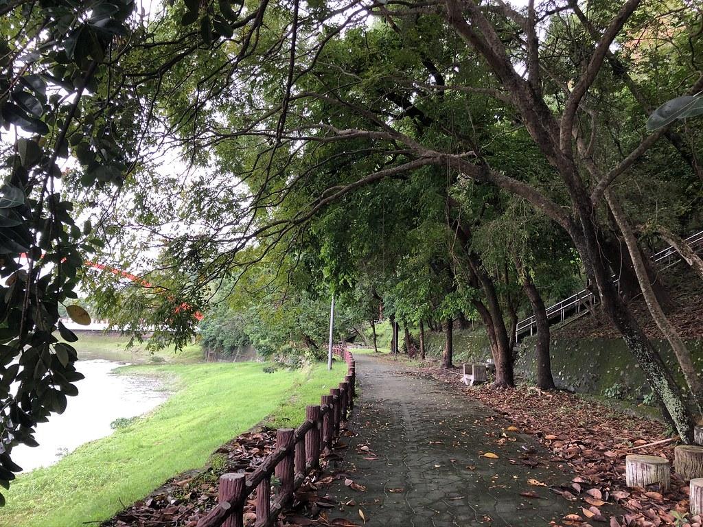 美崙溪口菁華橋枝葉扶疏、蒼鬱盎然,不但民眾喜愛來此散步,也是臺灣狐蝠喜愛的棲地。攝影:廖靜蕙