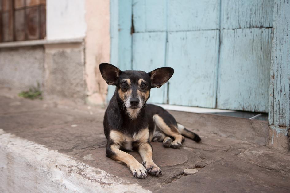 一條流浪狗在巴西的迪亞曼蒂納高地國家公園(Chapada Diamantina National Park)休息。全世界有多達3億隻流浪狗。PHOTOGRAPH BY ALEX SABERI, NAT GEO IMAGE COLLECTION