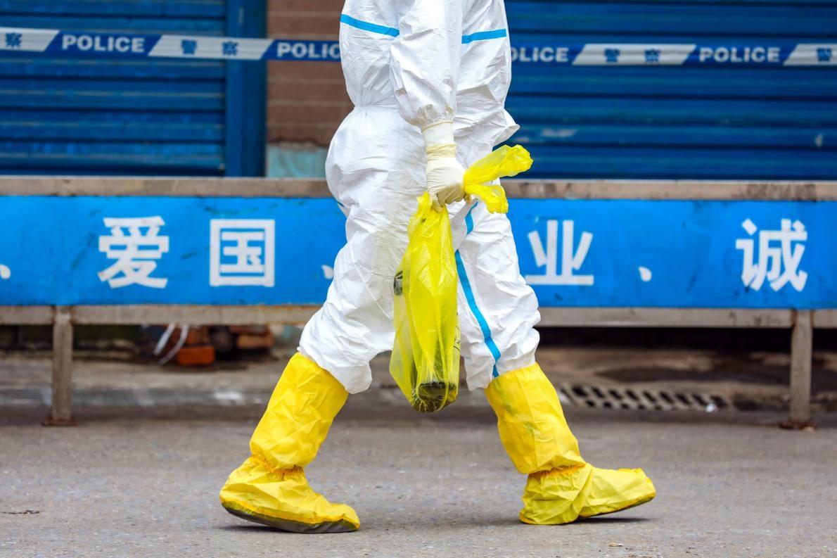 華南海鮮市場因為與首批冠狀病毒病例的關聯而遭到關閉,一名工人帶走一隻原本逃脫但剛在市場被抓獲的大鯢(giant salamander)。PHOTOGRAPH BY FEATURE CHINA/BARCROFT MEDIA VIA GETTY IMAGES