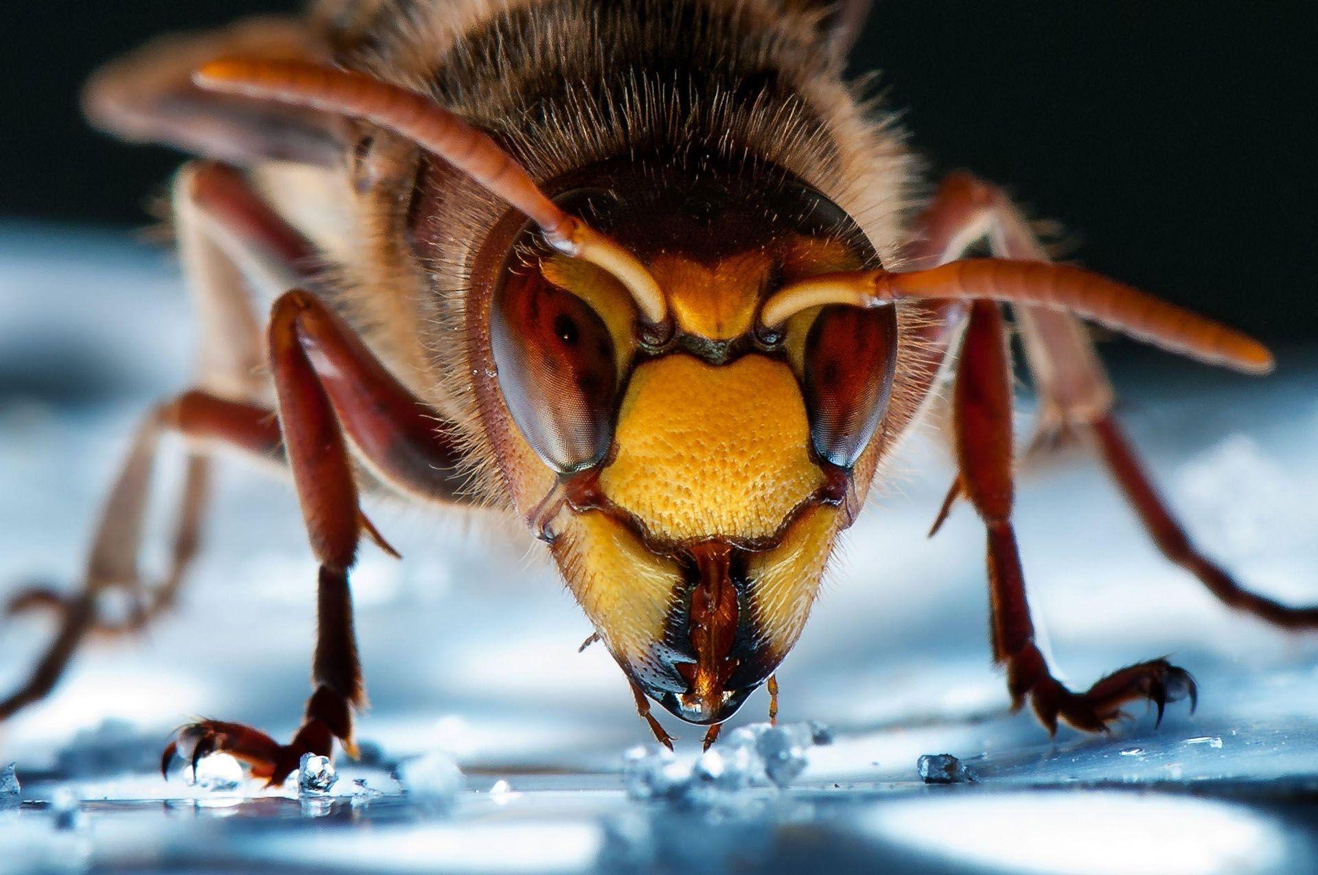Photograph by Wolfgang Korazija, National Geographic