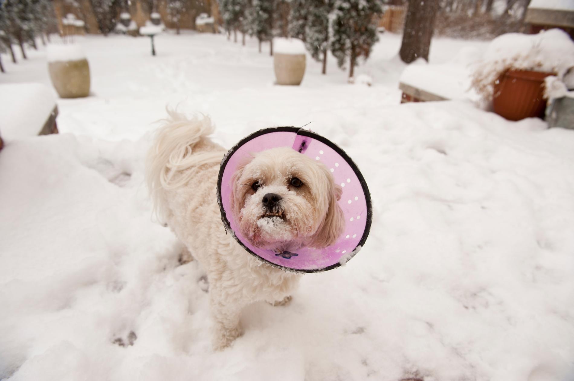 一項美國所做的全國性調查指出,年輕、小型的犬隻較容易碰到類鴉片造成的中毒意外。HOTOGRAPH BY JOEL SARTORE, NAT GEO IMAGE COLLECTION