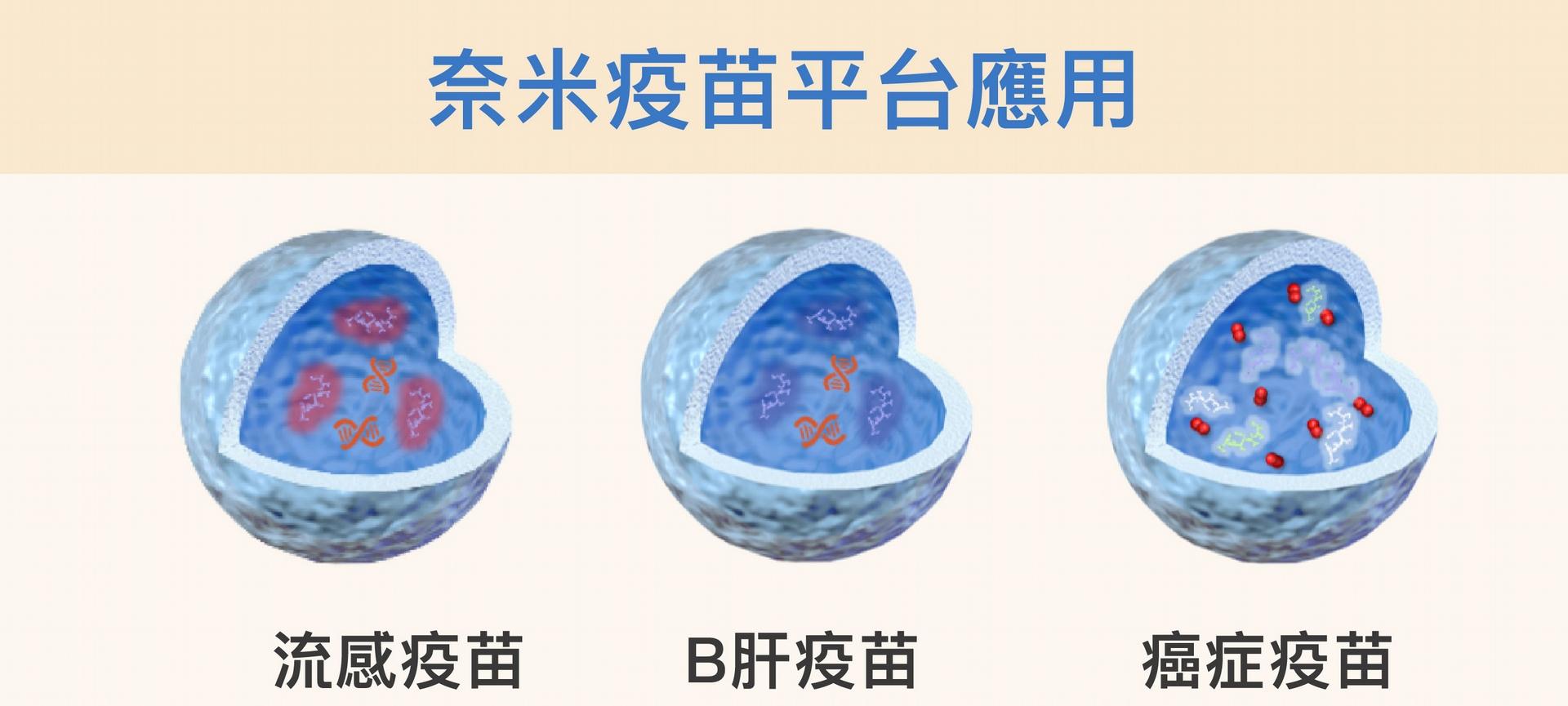 改變薄殼中空奈米粒子的外殼,並在裡頭放入不同的佐劑或藥物,就可能開發出流感、B肝或癌症等等不同疫苗。<br> 資料來源│胡哲銘 <br>圖說美化│林洵安
