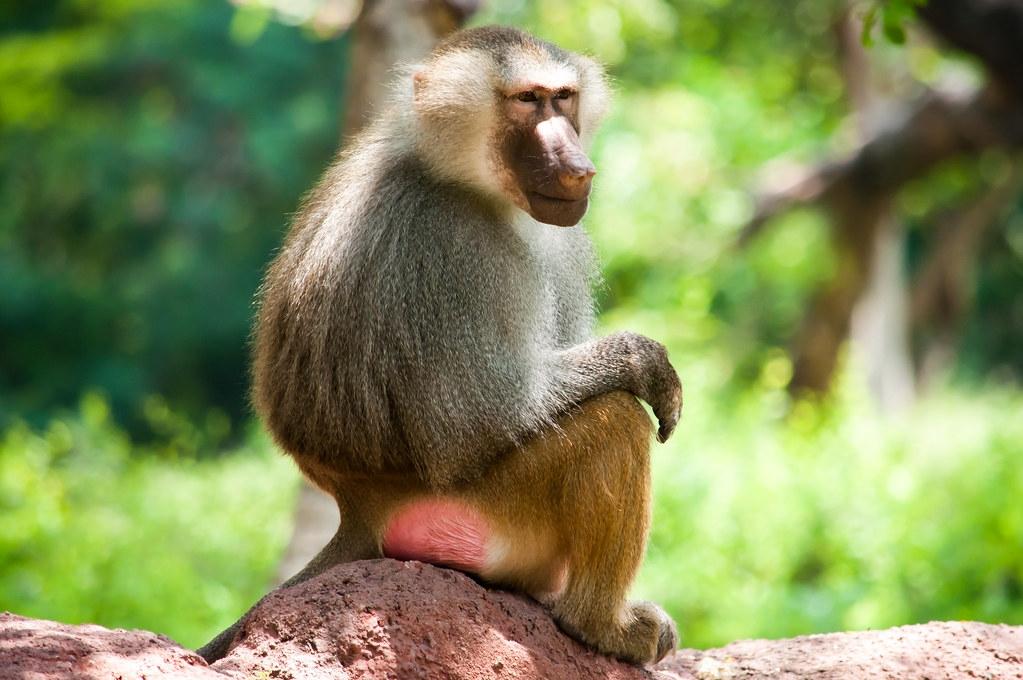 適應人類環境的野生動物更容易與人類共通傳染病毒。照片來源:Subash BGK(CC BY-NC-ND 2.0)