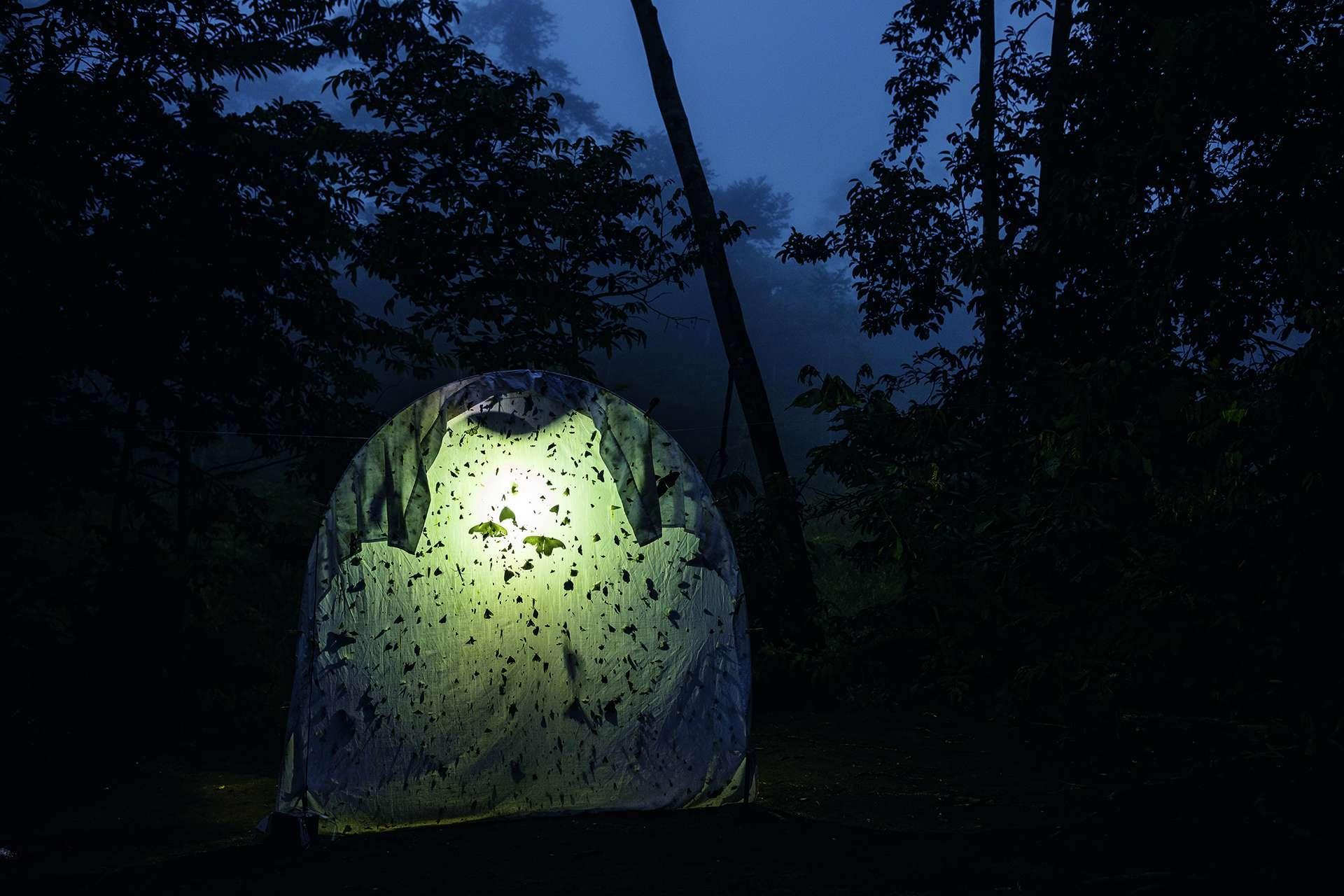 厄瓜多的亞馬遜雨林中,某個野外研究站的背光布收集到大量的夜間飛行昆蟲。在沒那麼偏遠的地點,不管是誘蟲燈捕到或沾黏在汽車擋風玻璃上的昆蟲數量都大幅下降。氣候變遷、棲地喪失與農藥全都可能是肇因。 PHOTOGRAPHED AT IYARINA STATION AT GOMATAON