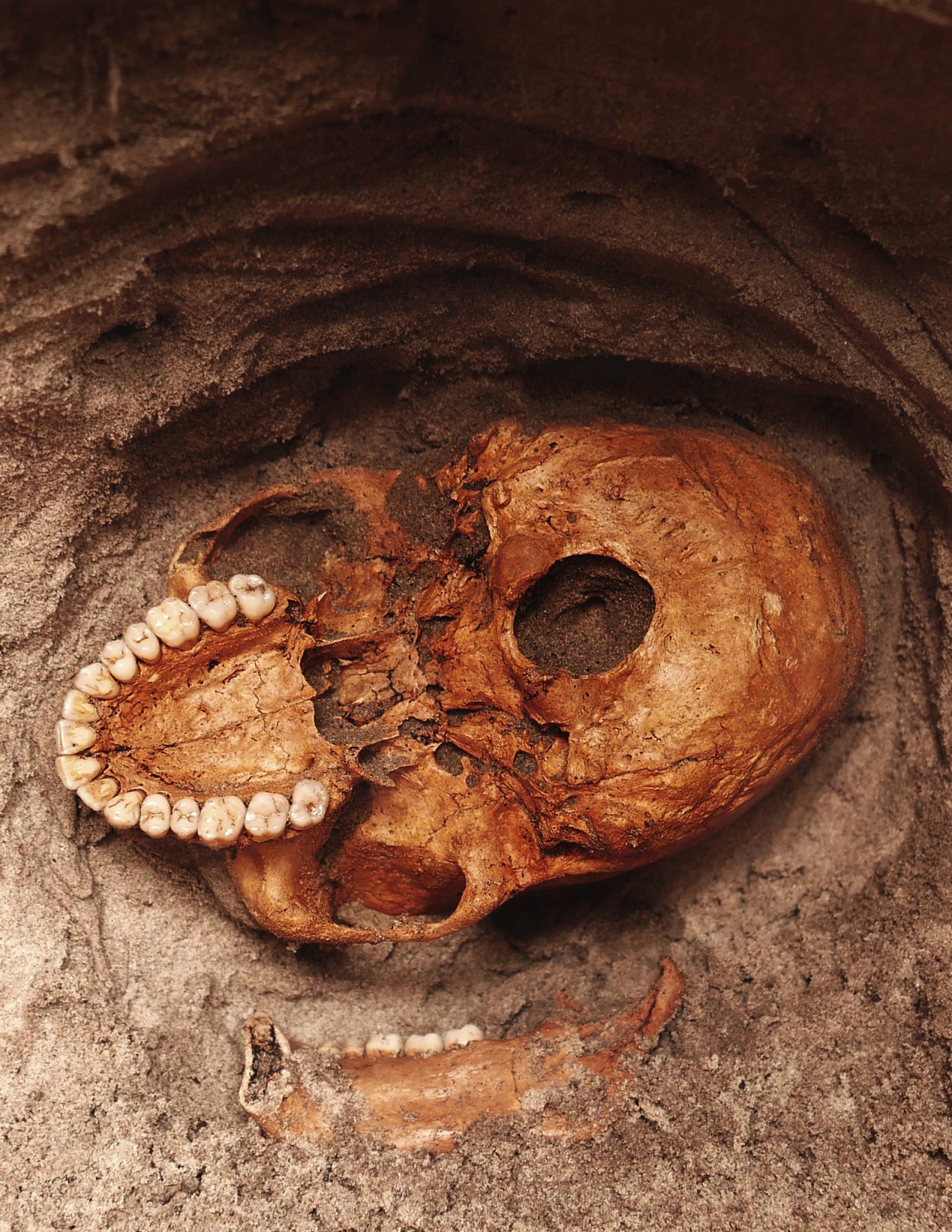 一顆人類顱骨從坦尚尼亞潘加尼河畔的灰色砂土中向外窺視,這座遺址曾經是早期史瓦希利(Swahili)漁村。大約1000年前,海嘯突然摧毀了這座村莊,造成許多居民罹難。PHOTOGRAPH BY VITTORIO MASELLI