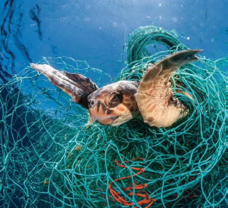 地中海海域遭幽靈漁網困住的赤蠵龜,照片取自世界動物保護協會2019年報告封面,Credit: Jordi Chias