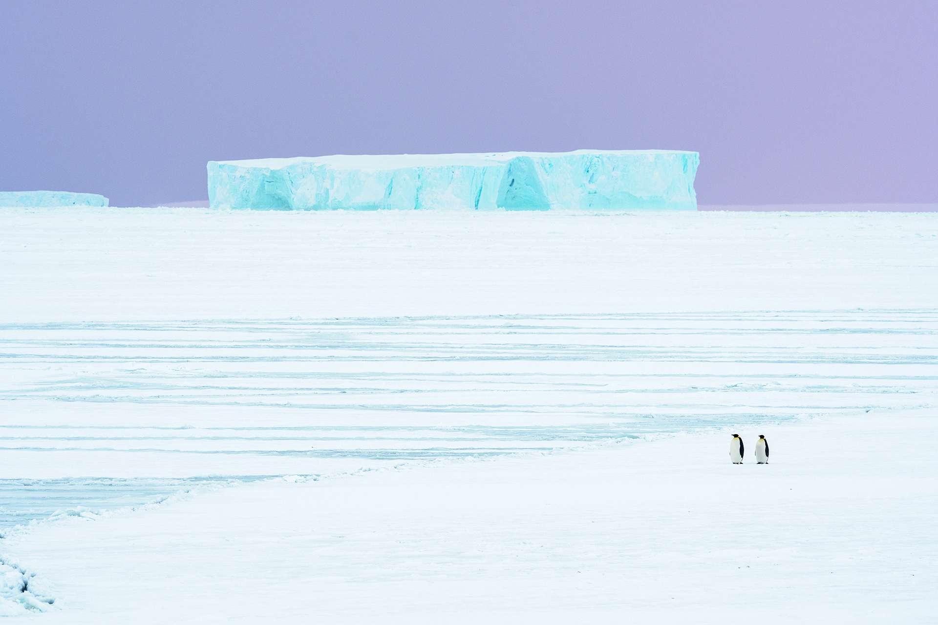 企鵝在秋天展開約10公里的旅程,從海中前往牠們在阿特卡灣的繁殖地。然而,變暖的氣候正造成牠們尋找配偶、繁殖後代與養育雛鳥所不可或缺的海冰日益消融。 PHOTO: STEFAN CHRISTMANN