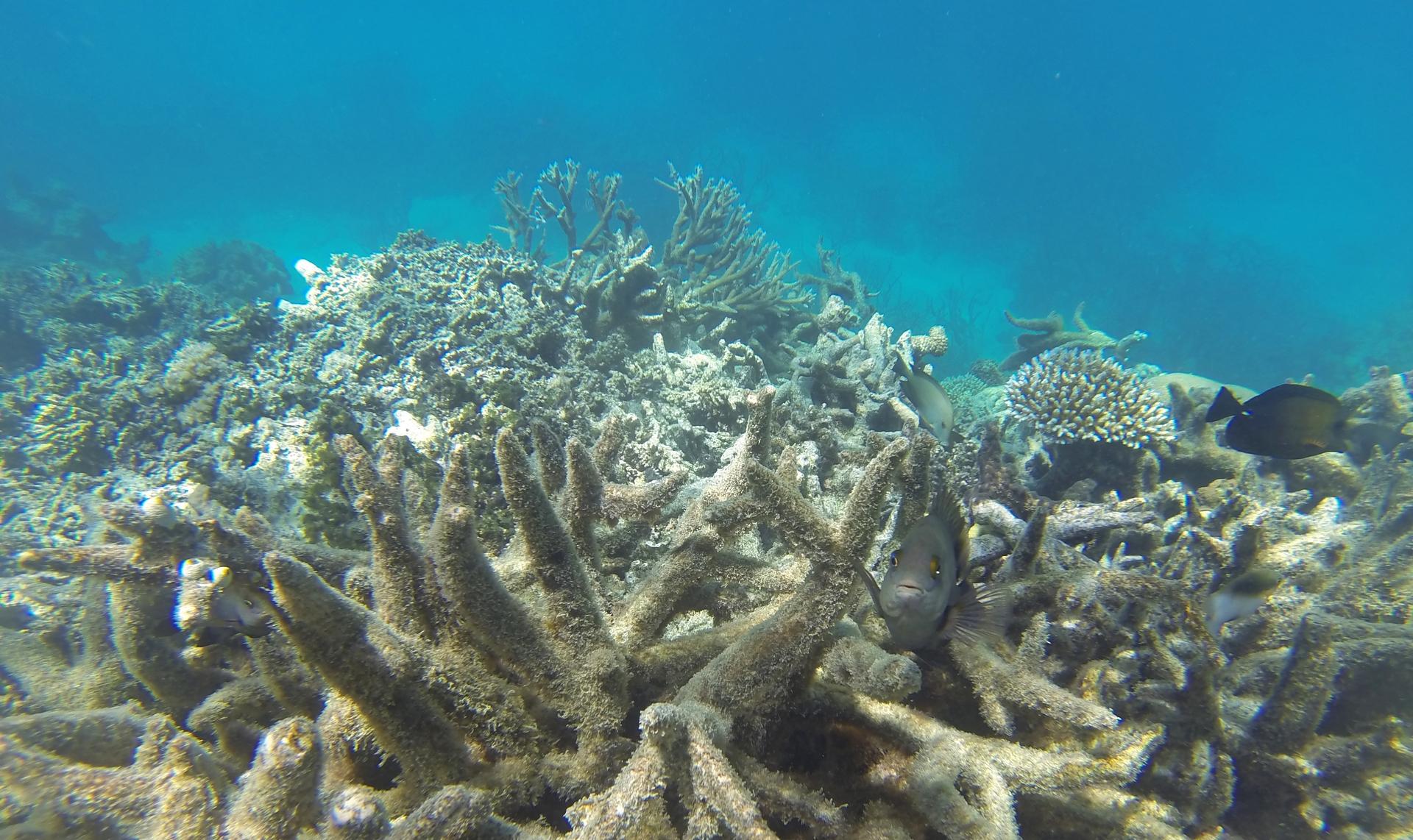 每年14,000噸的防曬乳已造成海洋裡的珊瑚礁白化與死亡。