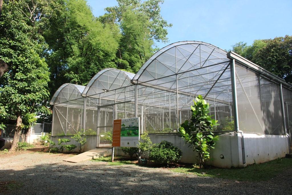 EDC在安蒂波洛市建有嘗試培育芽苗的苗圃。圖片來源:EDC