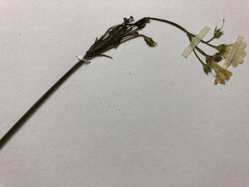 壓下植物的那一刻,時間與物候訊息也跟著凍結了。攝影:廖靜蕙