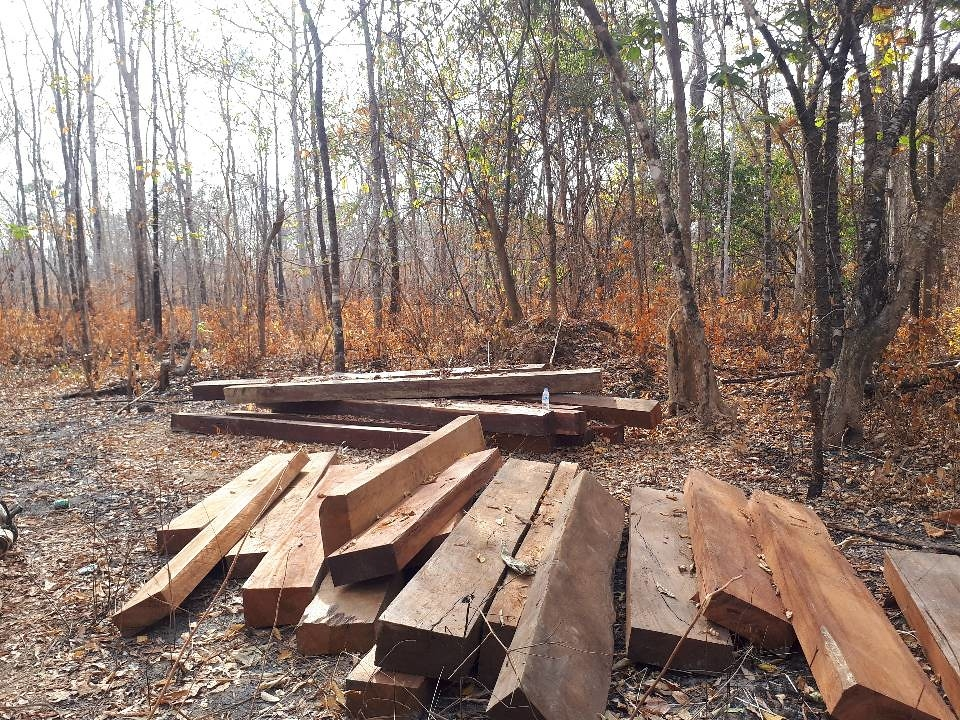 剛砍下來的木材堆放在普雷朗野生物保護區內。圖片來源:普雷朗社群網絡