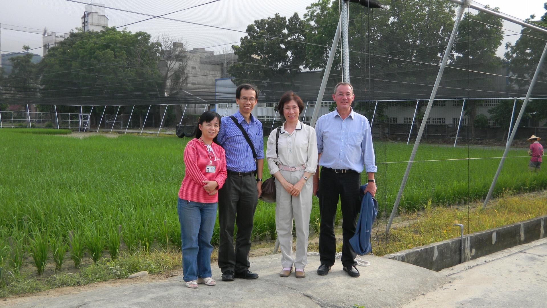 余淑美 (右二) 以及來自國際稻米研究中心的 C4 計畫第一到第三期的總主持人(右一)、國際稻米研究中心訪問學者(左二)、學生羅舜芳博士(左一),於水稻實驗水田旁合影。 圖片來源│余淑美