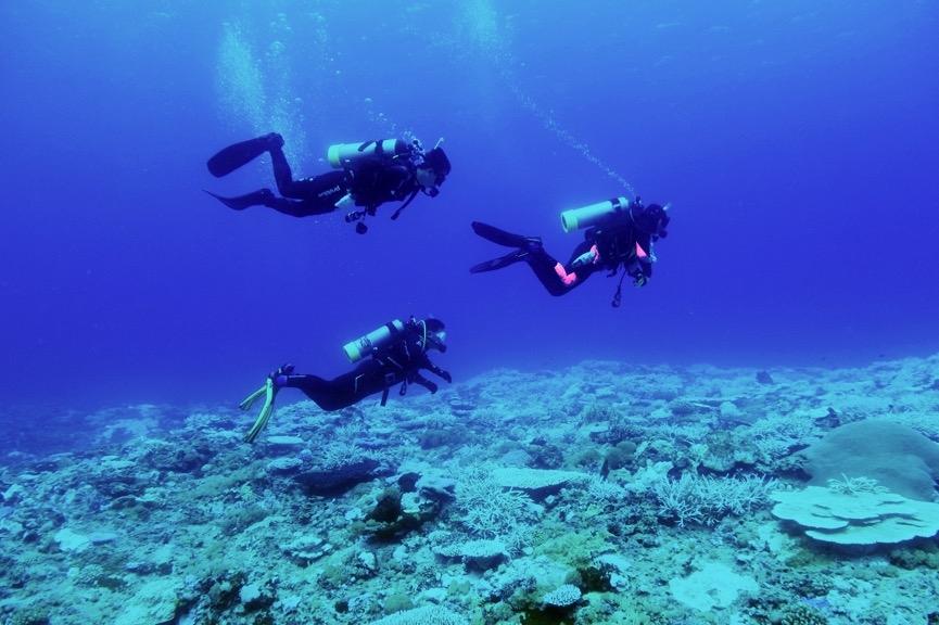 2020 年 7 月臺灣海域海溫不斷地升高,全國各海域均發生了嚴重的珊瑚白化事件。因此特別帶學員至龜灣海域,親眼目睹珊瑚白化的狀況。攝影:朱雲瑋
