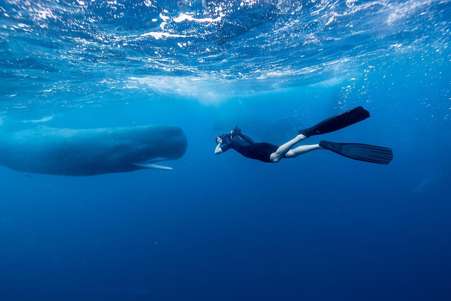 布萊恩.史蓋瑞得到難得機會,在多米尼克附近拍攝進行社交聚會的六隻抹香鯨。多米尼克抹香鯨計畫的研究人員和當地官方合作,保護研究這種鯨魚獨特的覓食與繁殖習性。 PHOTOS: STEVE DE NEEF. NGM MAPS