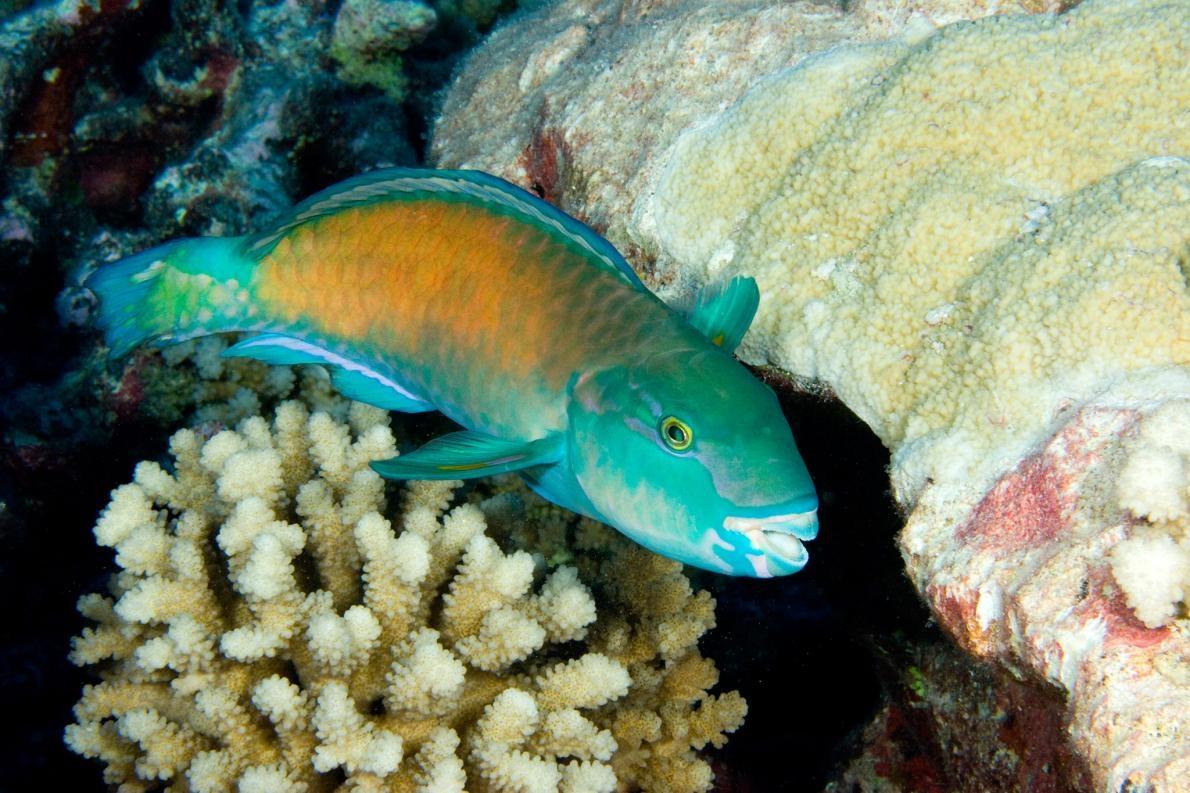 海洋生物愛愛,千奇百怪