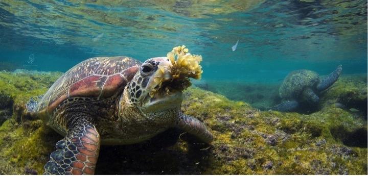 2018 【國家地理講座】海龜點點名 愛海護龜行動