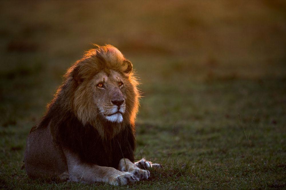 國王與最後一道陽光