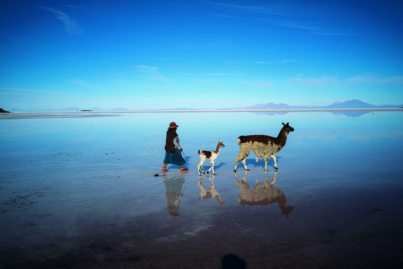 玻利維亞藏有大量鋰礦藏的烏由尼鹽沼上,一名艾馬拉族婦女將兩頭 羊駝趕回牧群。攝影:希德利克.賈布耶 CÉDRIC GERBEHAYE