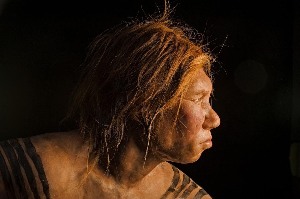 新線索解密:尼安德塔人的基因如何影響你的健康