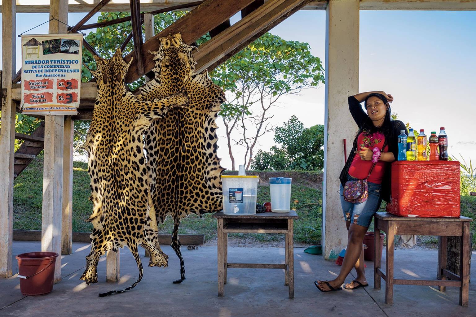 交易活動不只限於玻利維亞。在祕魯的伊基多斯市郊,村莊居民販賣他們獵得的美洲豹皮。他們說附近的中國公司有人每年來一次,購買犬齒但不買豹皮。 PHOTOGRAPH BY STEVE WINTER
