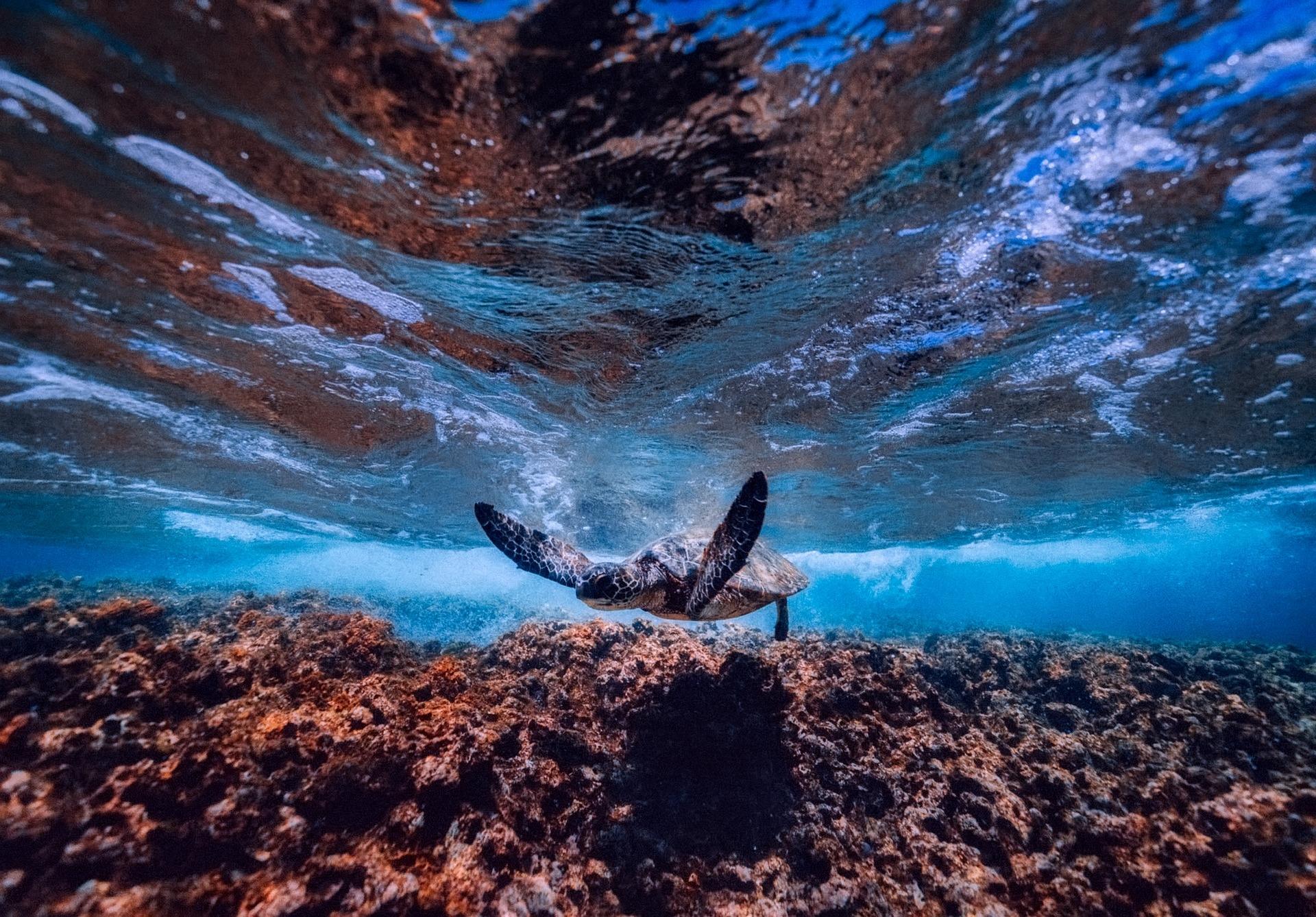 酷知識測驗:潛入珊瑚王國!