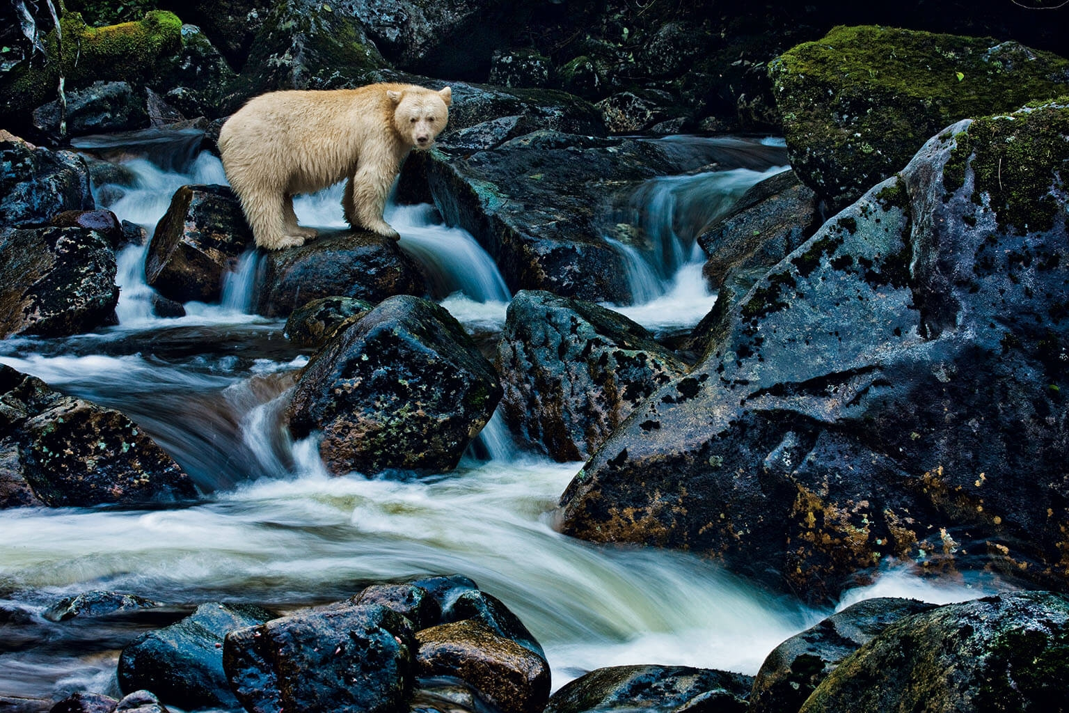 PHOTO: PAUL NICKLEN, NATIONAL GEOGRAPHIC CREATIVE